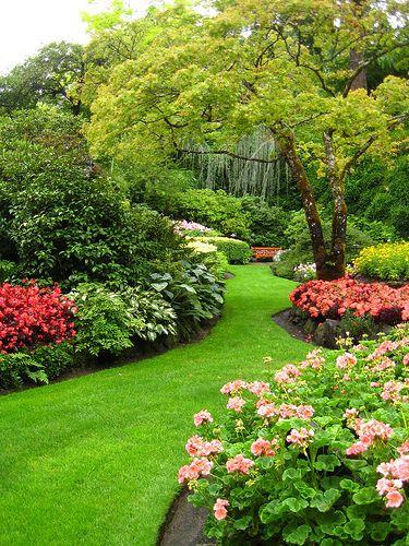 azaleas in beautiful garden